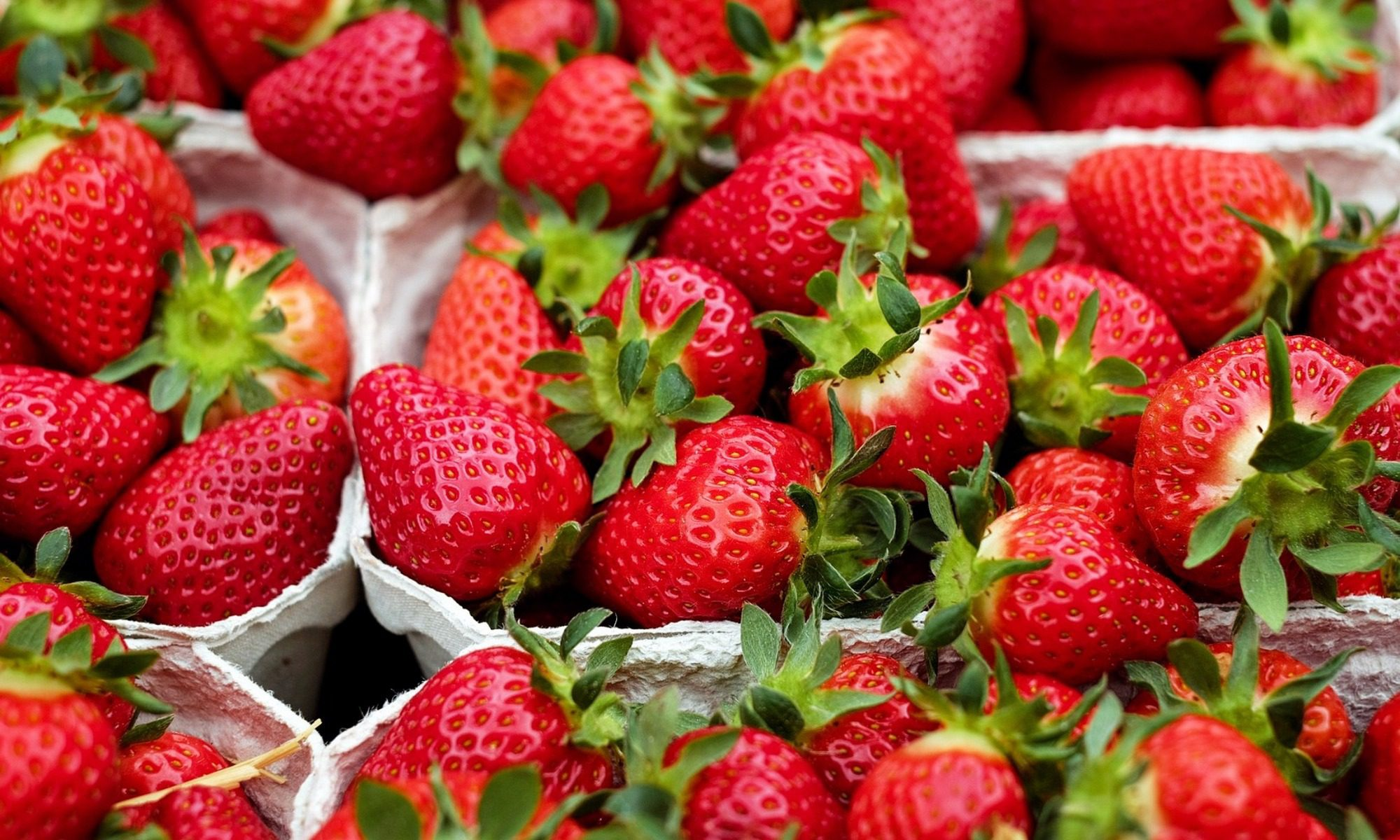 "Cooperative strawberry farm ""Ecofruits"""