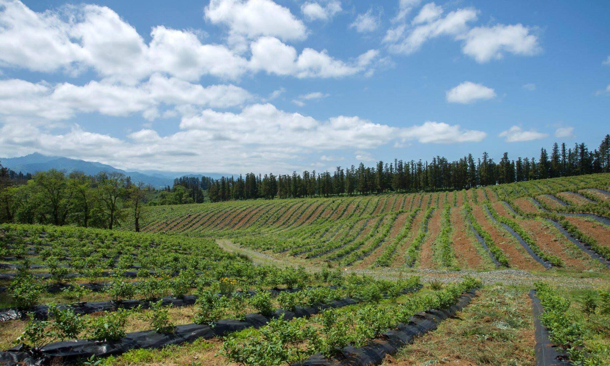 "Cooperative strawberry farm ""Ecofruits"""